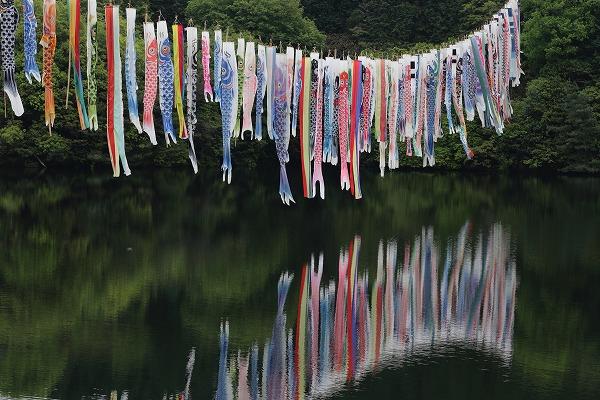源平谷池・鯉のぼり 160425 03