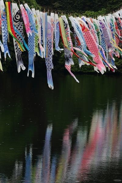 源平谷池・鯉のぼり 160425 06
