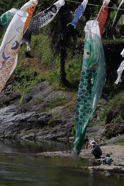 衝上断層鯉のぼり 160505 01