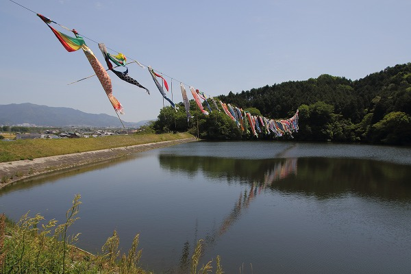 源平谷池鯉のぼり 160505 02