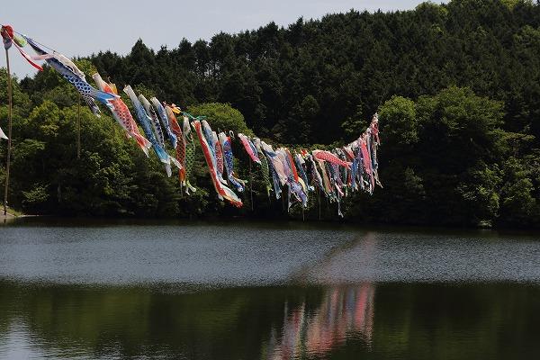 源平谷池鯉のぼり 160505 01