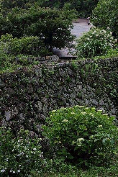 惣河内神社山紫陽花 160607 06