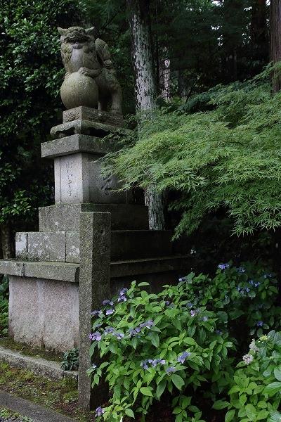 惣河内神社・山紫陽花 160613 02