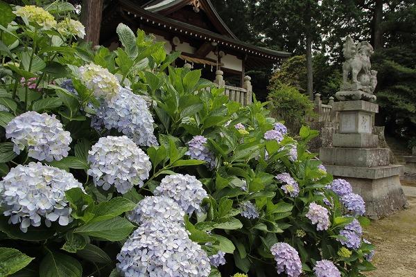 拝志神社 160615 03