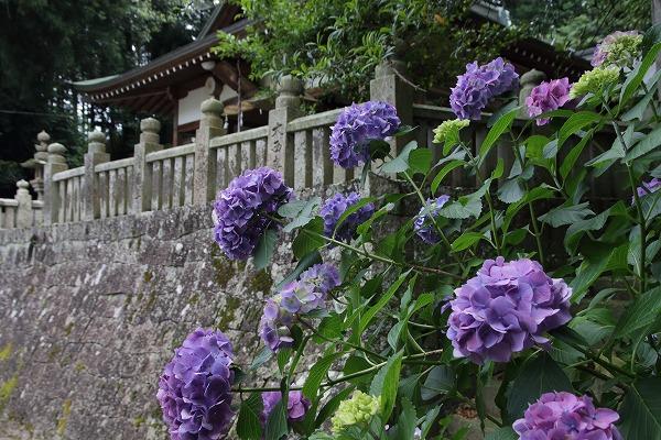 拝志神社 160615 05