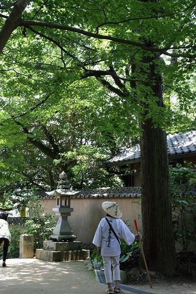浄瑠璃寺 160618 02