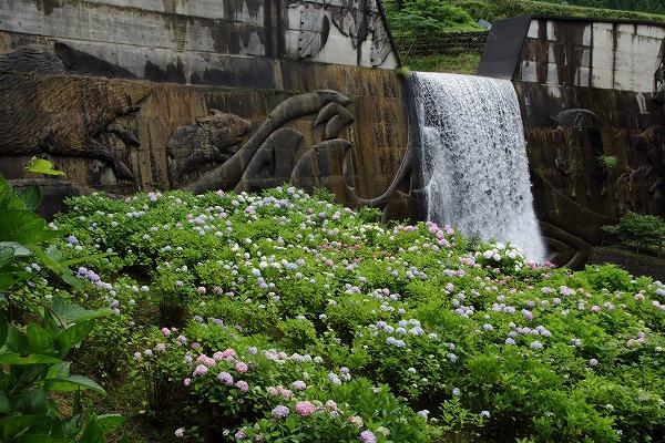 白猪の滝農村公園・紫陽花 160630 06