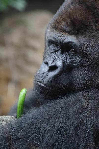 上野動物園ハオコ 160716 01