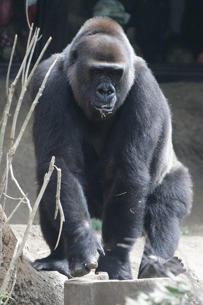 上野動物園モモコ 160716 01