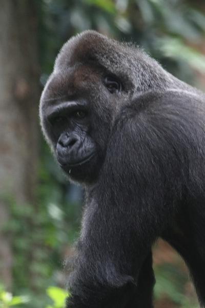 上野動物園モモコ 160716 02