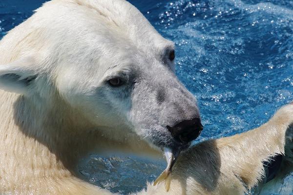 とべ動物園バリーバアジプレゼント 160718 08