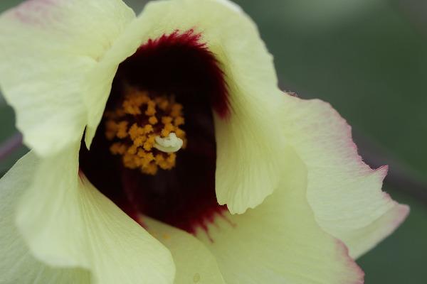 花き研究指導室 ハナワタ 160816 02