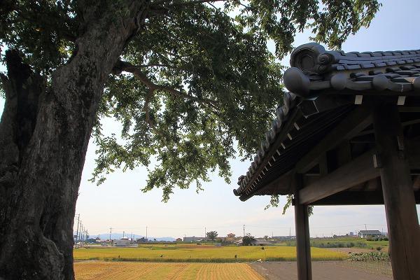 花き研究指導室 アナワタ 160816 002