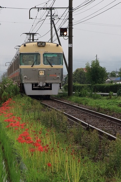 伊予鉄電車&彼岸花 160922 03