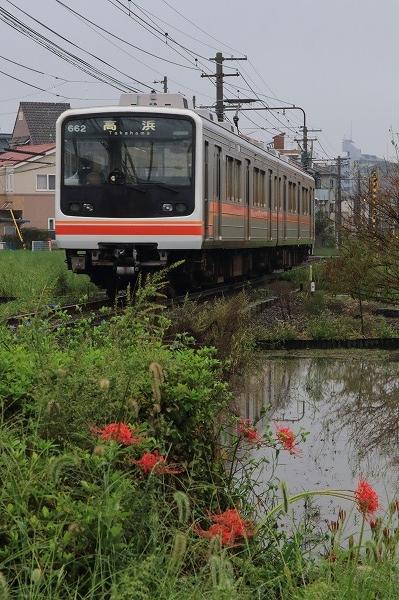伊予鉄電車&彼岸花 160922 02
