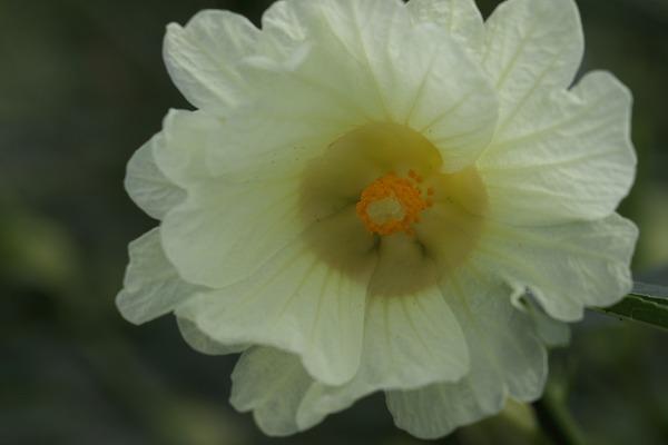 花き研究指導室 haibisukasu 160917 04