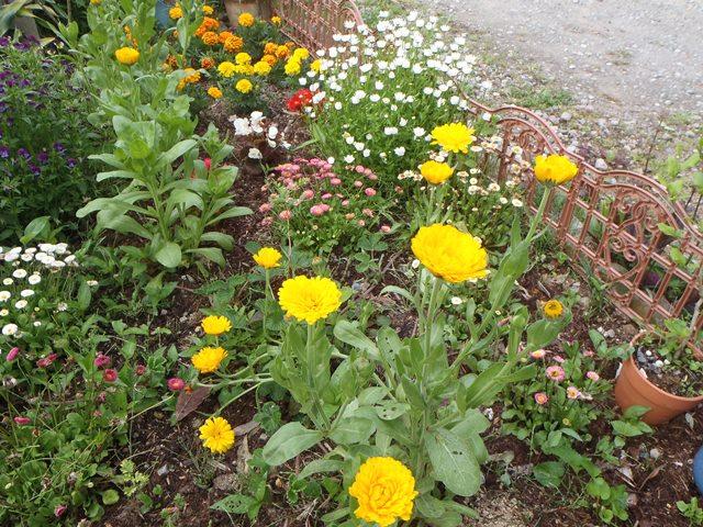 我が家の花壇20160514