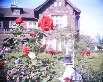 秋バラと洋館・旧古河庭園:R2
