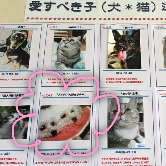 函館 cafe' en  チャリティイベント 写真コンテストに投票!2