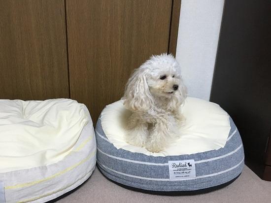 ベッドが秋バージョン 3