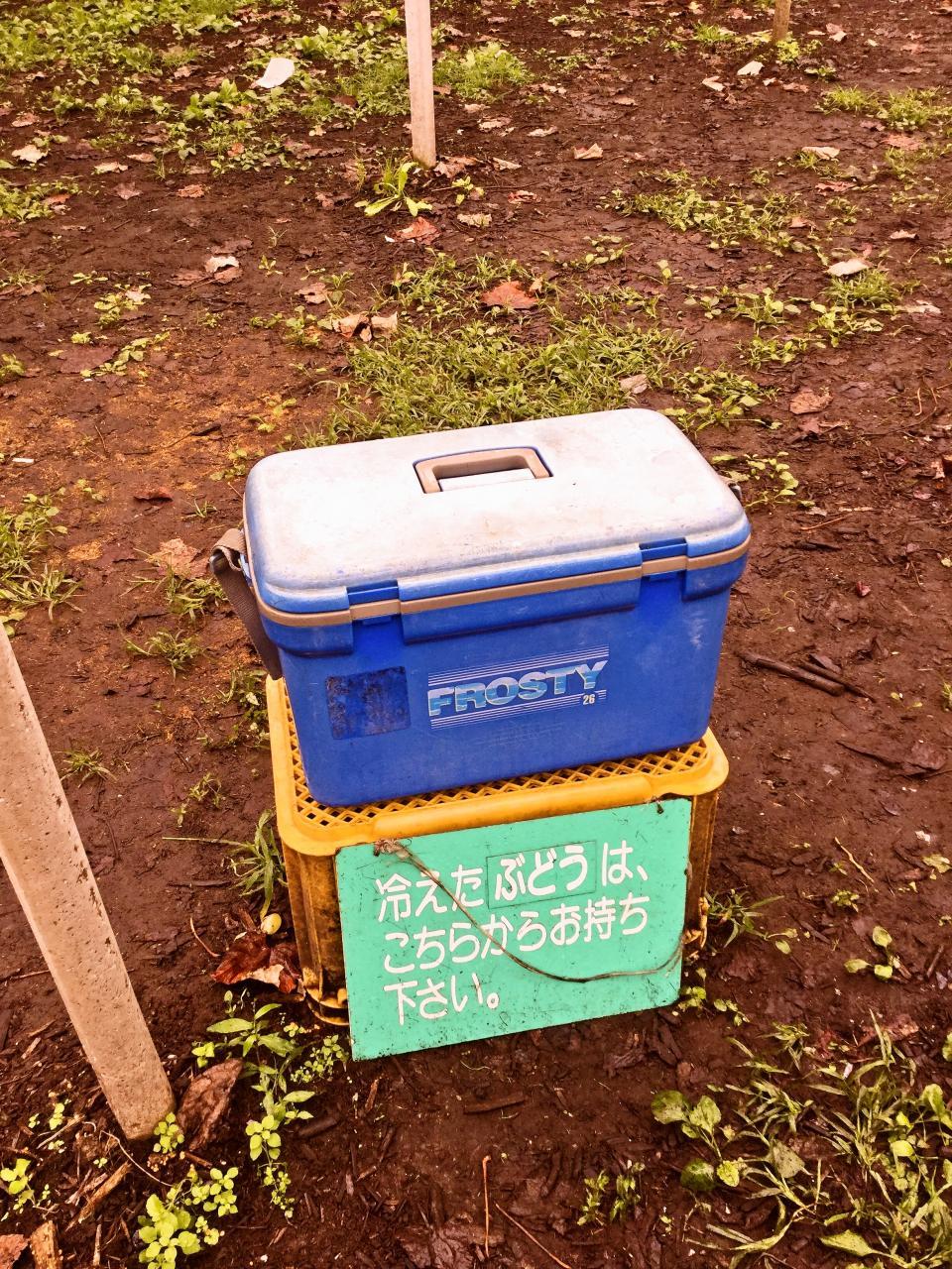 浅間園(ぶどう)