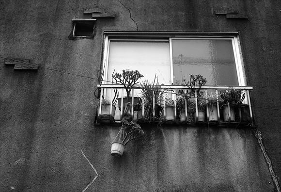 窓辺-6_R