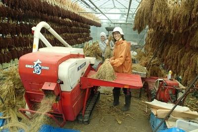 1009農法セミナーキビ脱穀_R2
