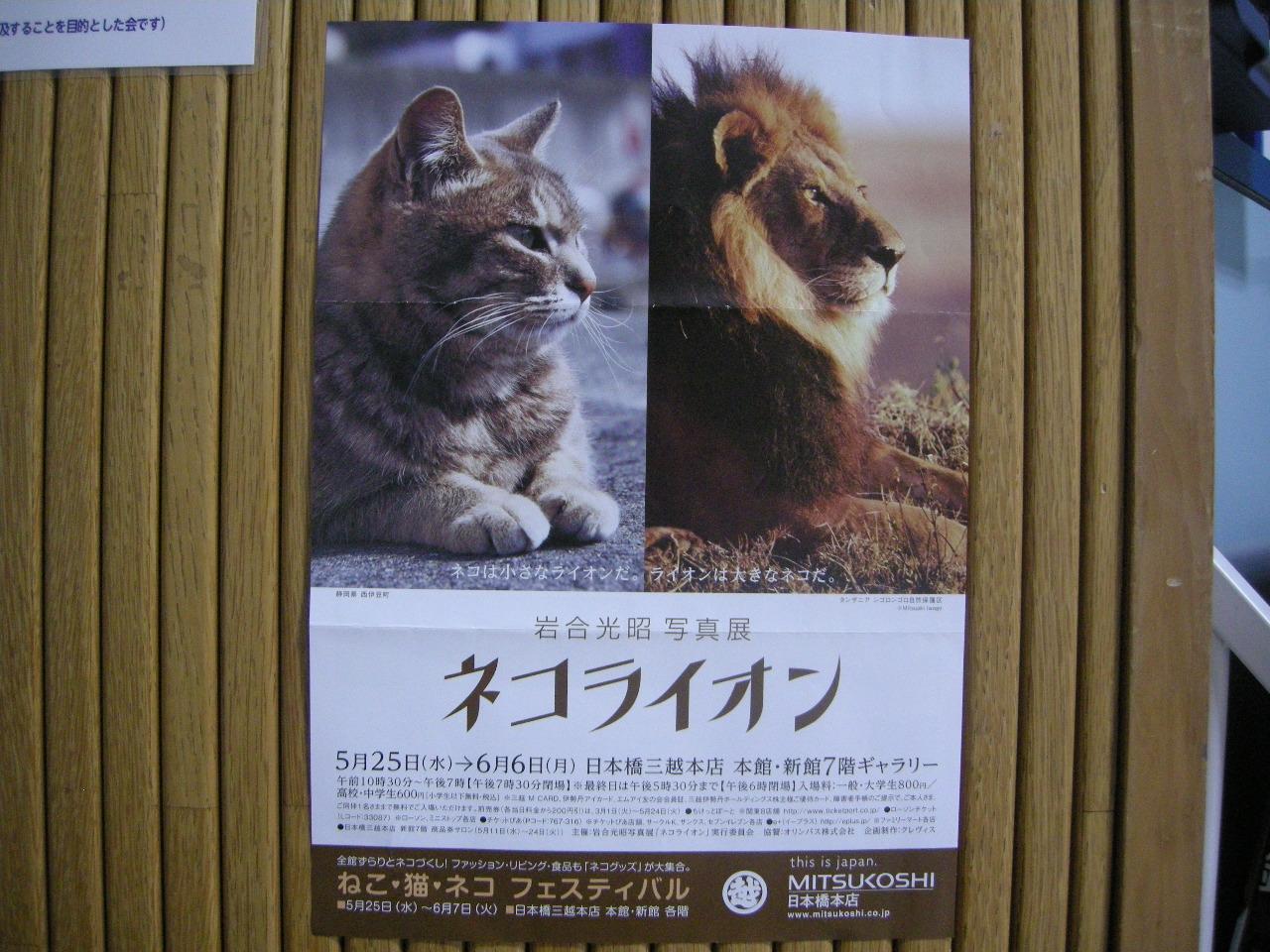 ネコライオン01