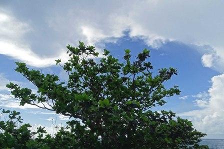 台風後2W DSC09484
