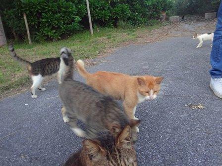 猫サザゲ③ DSC02421
