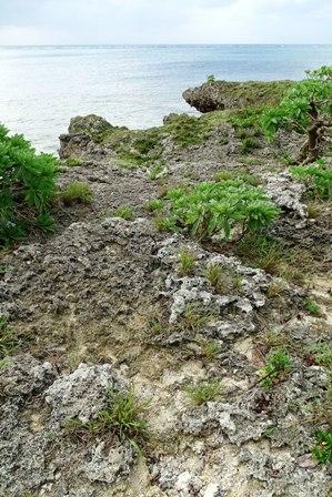 磯岩状況 DSC09730