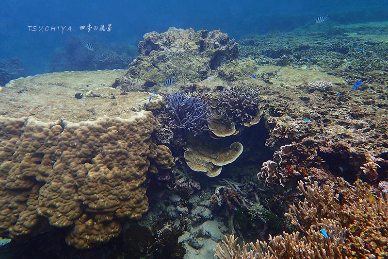 石垣の海 2