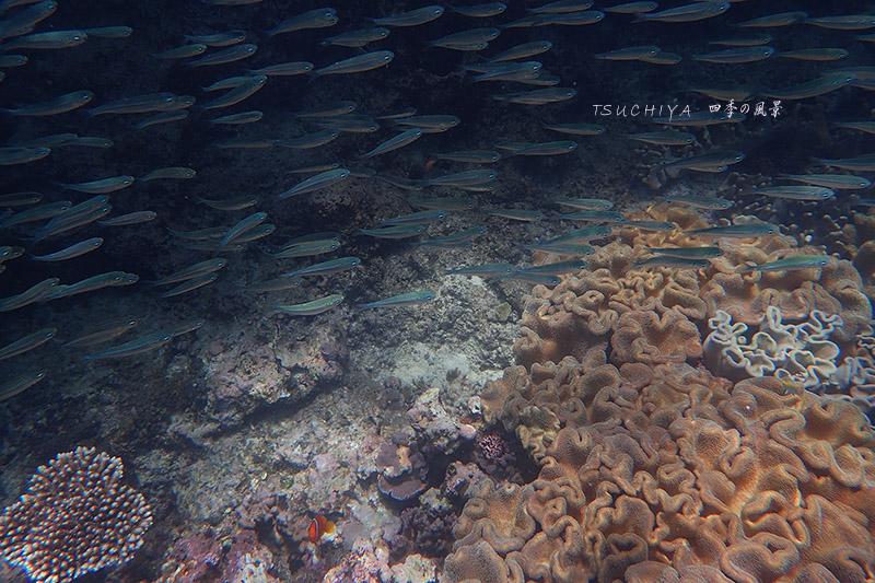 宮古島 海 2