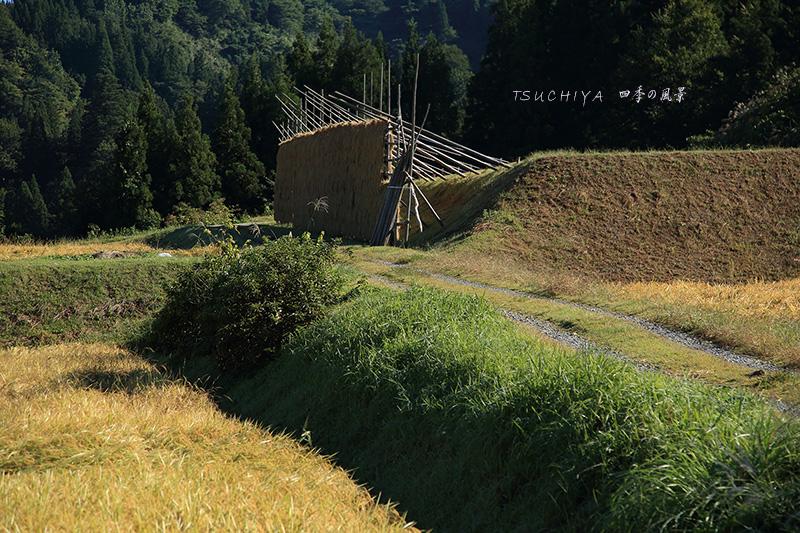 松之山 19