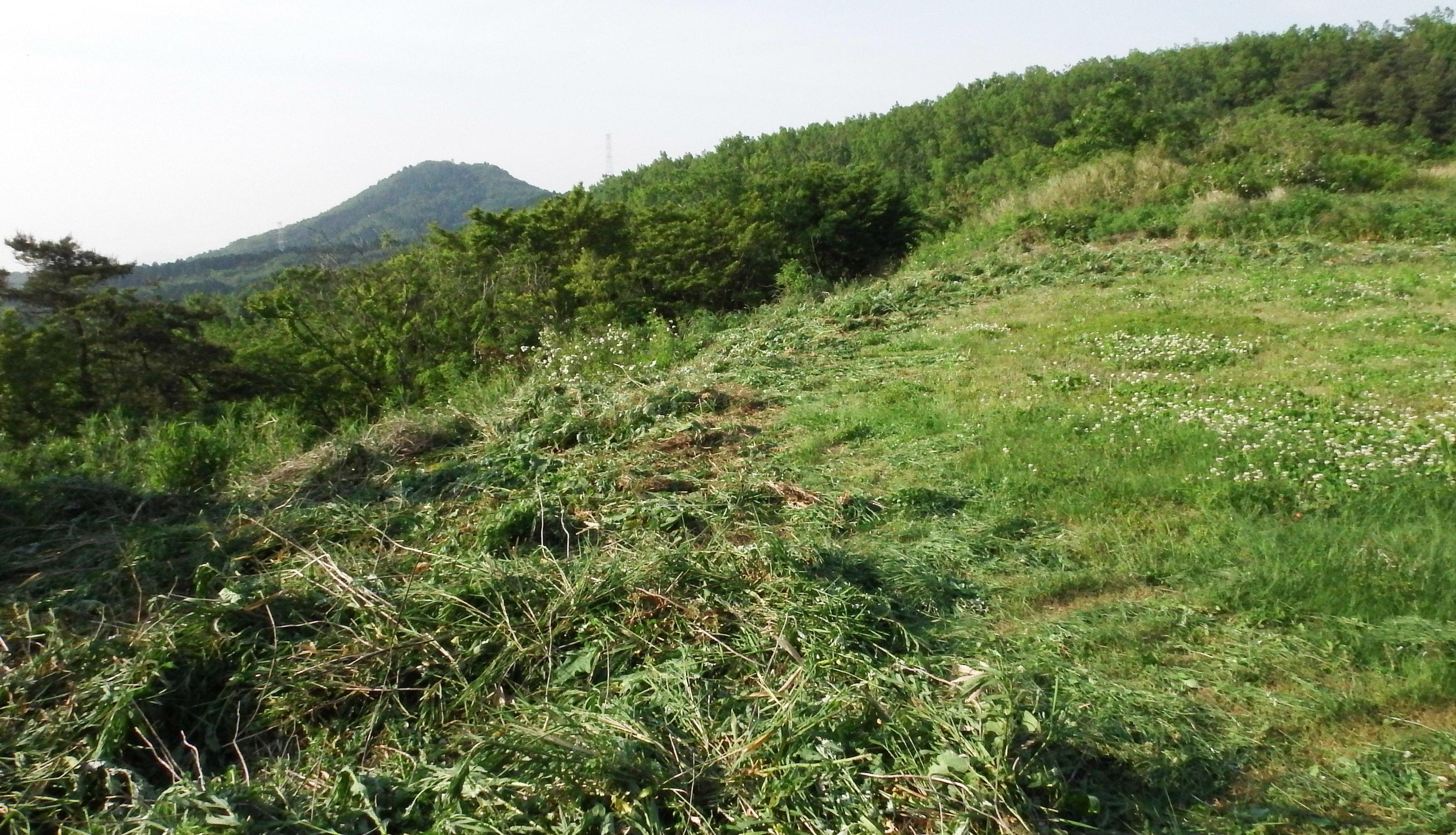 山側草刈り