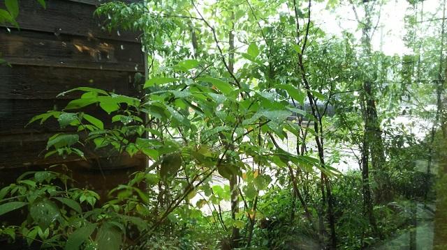 160622 林のカフェ③ ブログ用