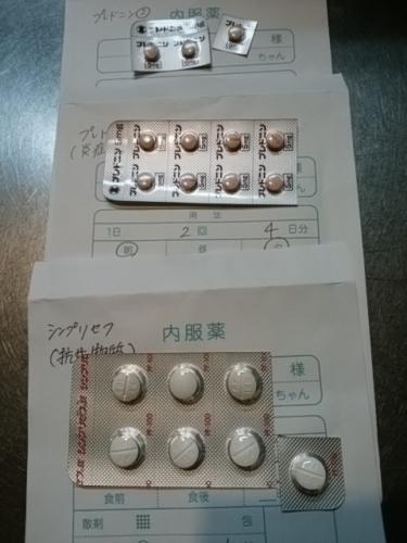 2016犬薬