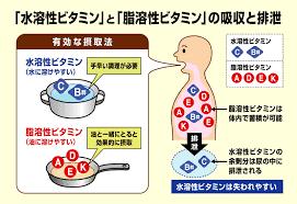ビタミン水溶性