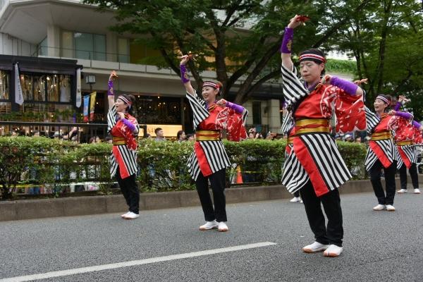 super-yosakoi16080947.jpg