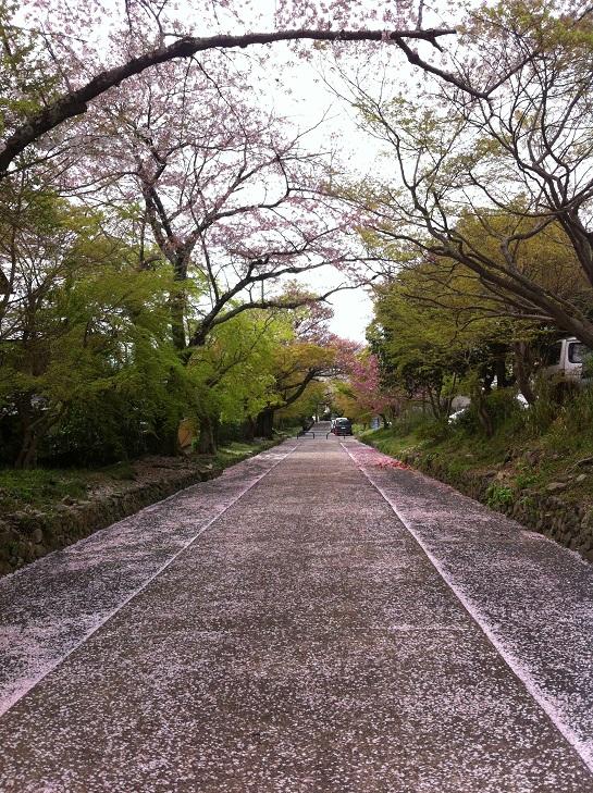 鷺ノ森花びらの参道