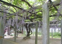 三大神社2