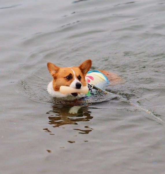 遠くまで泳ぎたい