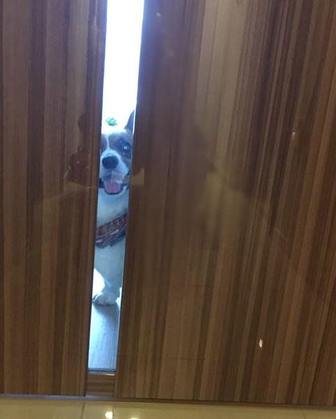 ドアごし犬