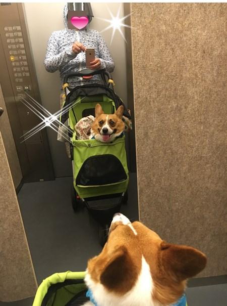 エレベーター自撮り