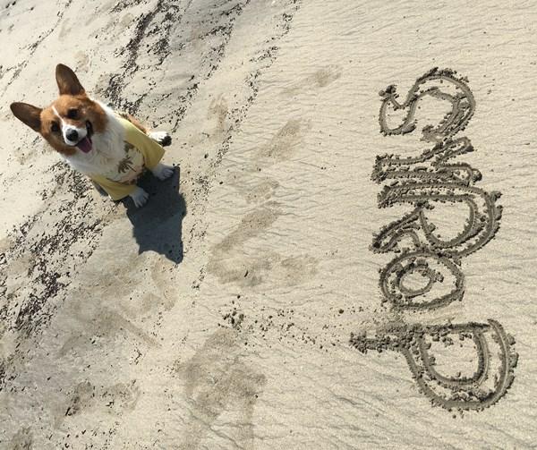 間違った名前と砂浜