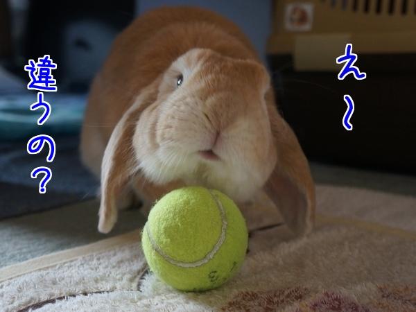 テニスボール3