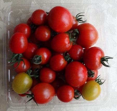 8種類のトマト