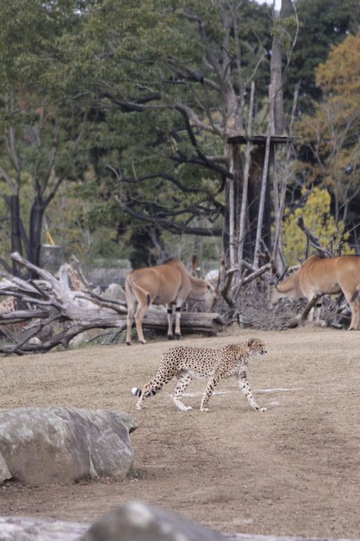 '15.12.6 cheetah 1572