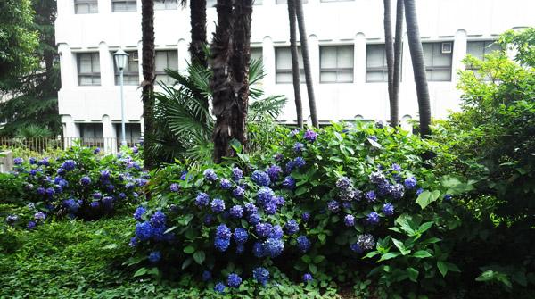 前は早稲田大学キャンパス