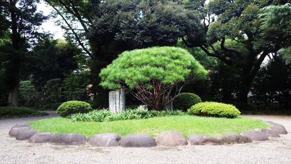 玄関前の飾り松